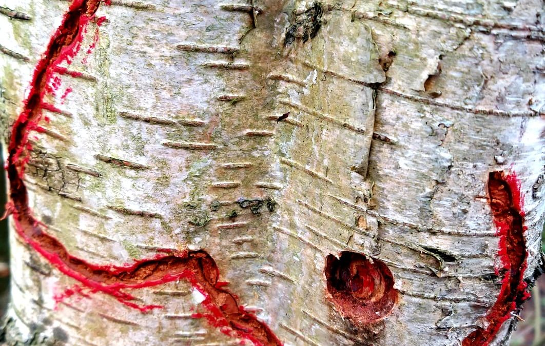bomenvernieling
